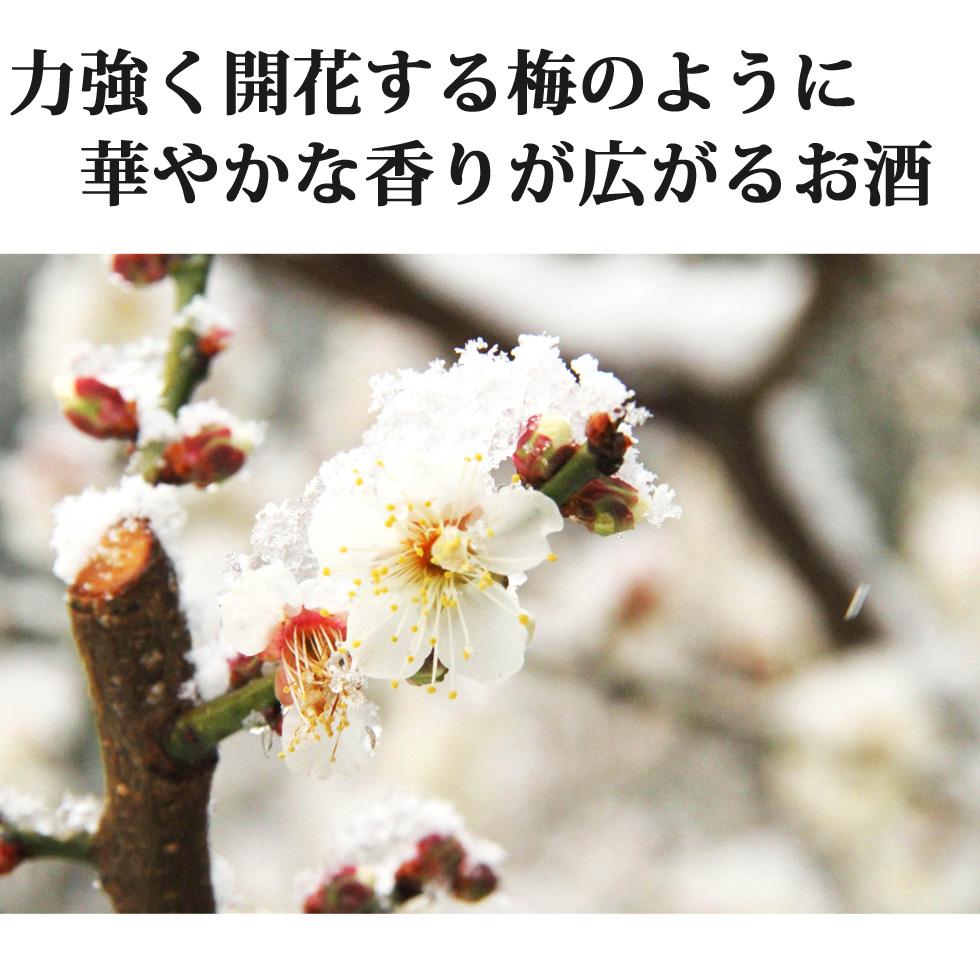 梅の花,香雪,雪,冬,梅,梅林