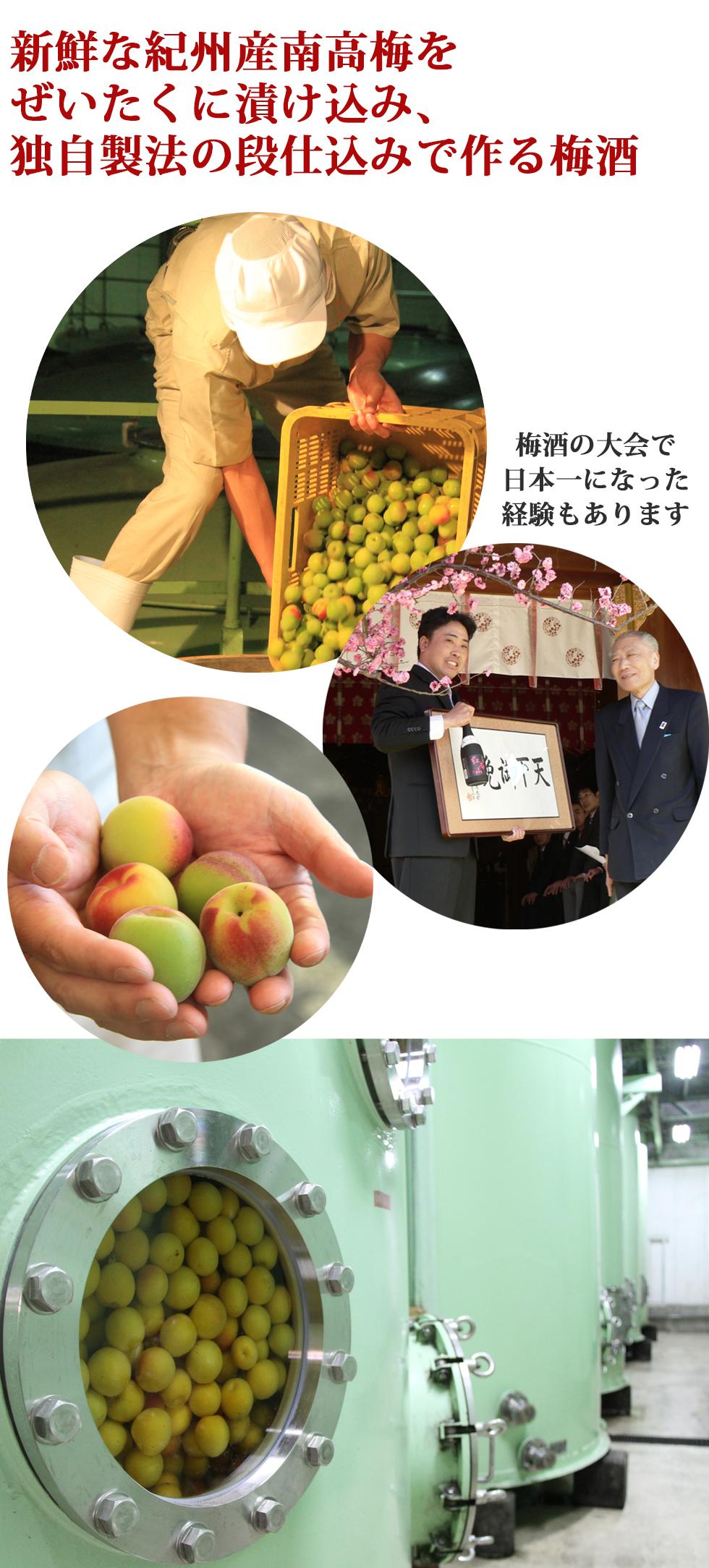 中野BCの説明,梅酒造り,梅酒の作り方